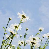 唯美花卉风景_www.qqtu8.net